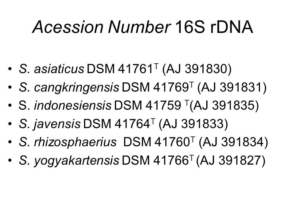 Acession Number 16S rDNA S. asiaticus DSM 41761 T (AJ 391830) S. cangkringensis DSM 41769 T (AJ 391831) S. indonesiensis DSM 41759 T (AJ 391835) S. ja