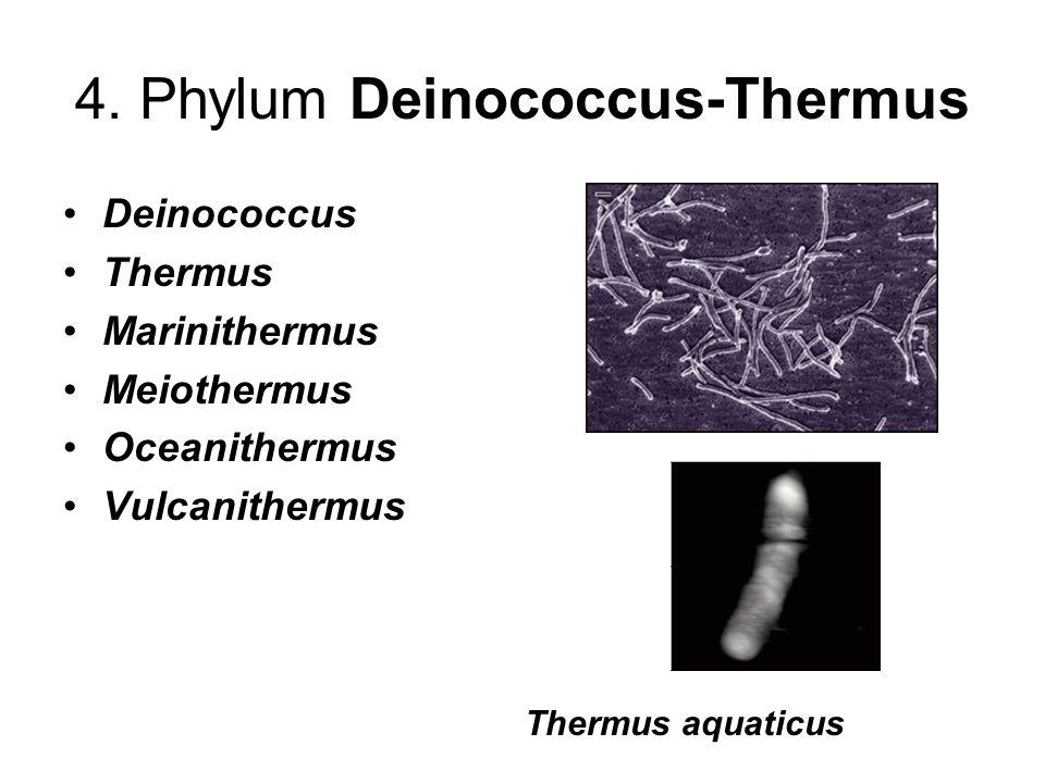 4. Phylum Deinococcus-Thermus Deinococcus Thermus Marinithermus Meiothermus Oceanithermus Vulcanithermus Thermus aquaticus