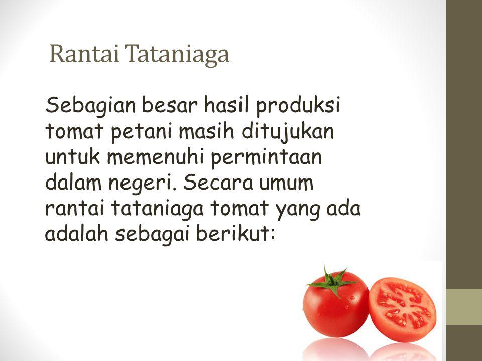 Rantai Tataniaga Sebagian besar hasil produksi tomat petani masih ditujukan untuk memenuhi permintaan dalam negeri. Secara umum rantai tataniaga tomat