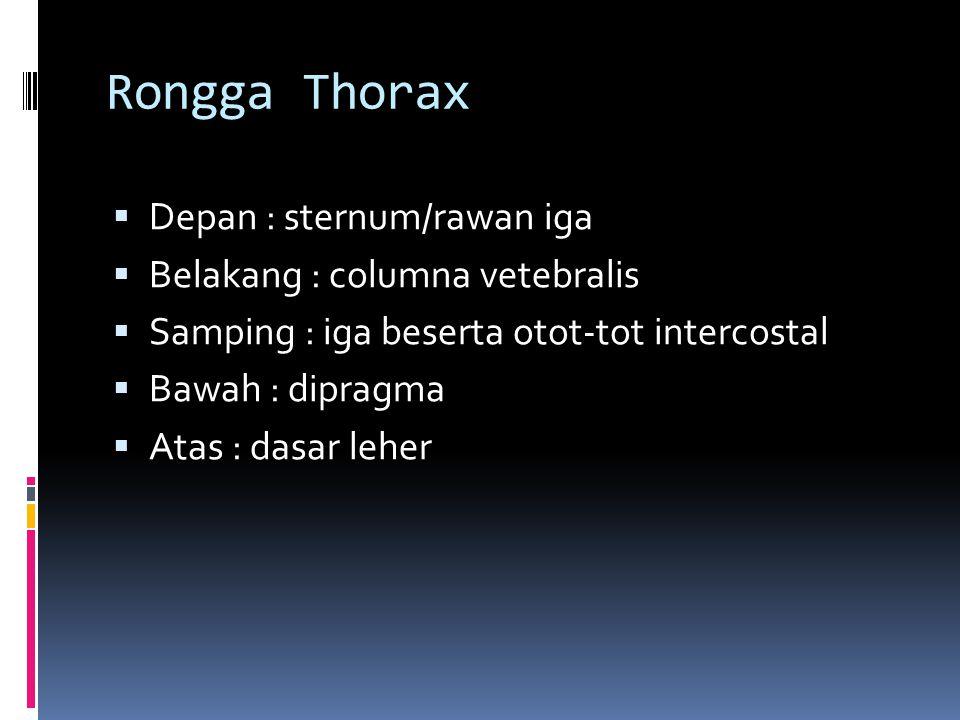 Rongga Thorax  Depan : sternum/rawan iga  Belakang : columna vetebralis  Samping : iga beserta otot-tot intercostal  Bawah : dipragma  Atas : das