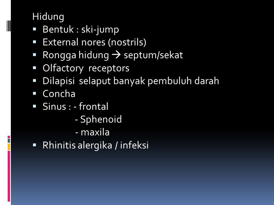 Hidung  Bentuk : ski-jump  External nores (nostrils)  Rongga hidung  septum/sekat  Olfactory receptors  Dilapisi selaput banyak pembuluh darah 