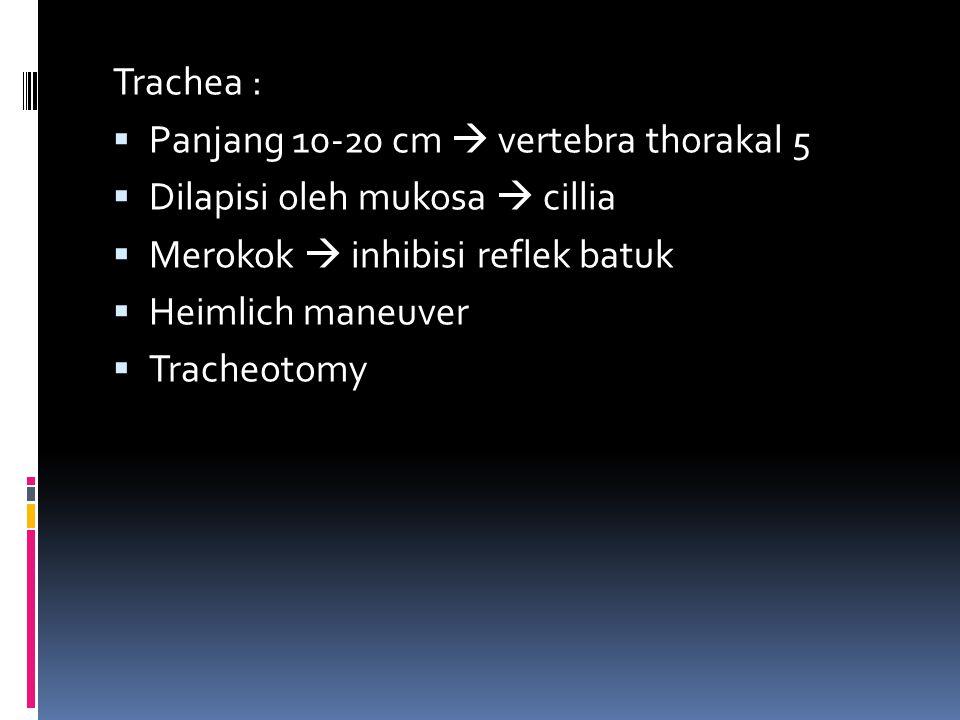 Trachea :  Panjang 10-20 cm  vertebra thorakal 5  Dilapisi oleh mukosa  cillia  Merokok  inhibisi reflek batuk  Heimlich maneuver  Tracheotomy