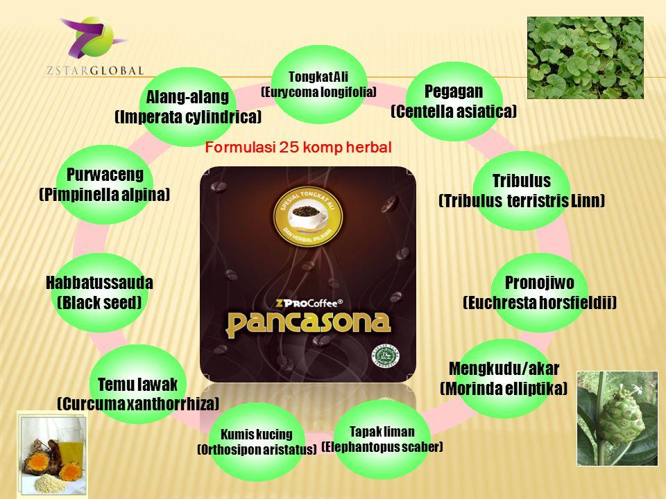 Formulasinya dari 25 komponen herbal(tanaman obat) yang bersinergi dan unik. Racikan PANCASONA mempunyai multi khasiat kesehatan yang dahsyat.. sebaga