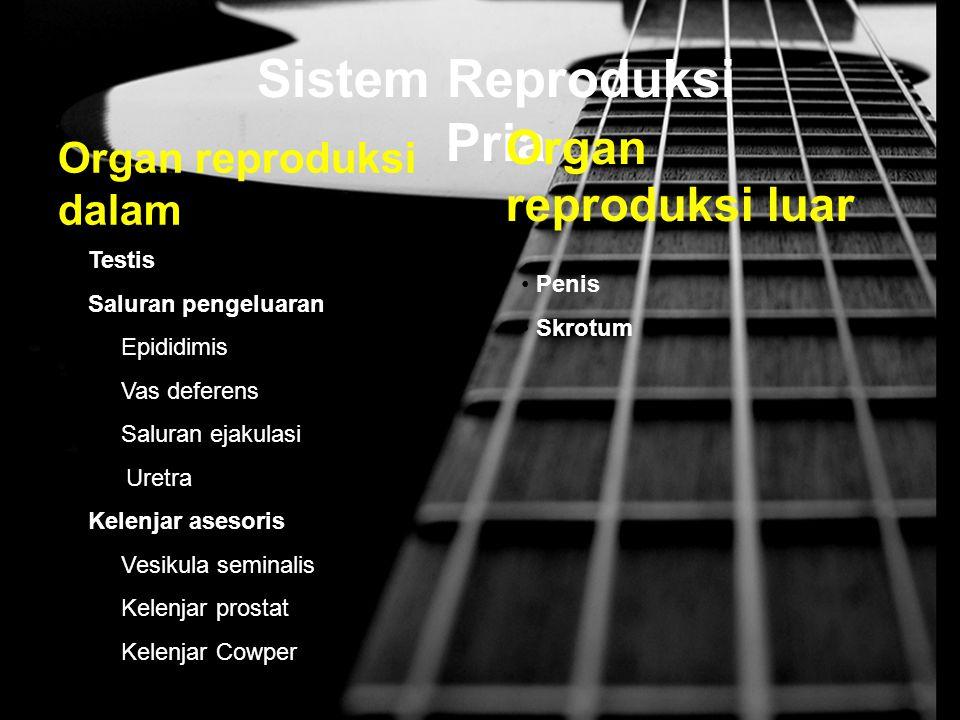 Sistem Reproduksi Pria Organ reproduksi dalam Testis Saluran pengeluaran Epididimis Vas deferens Saluran ejakulasi Uretra Kelenjar asesoris Vesikula s