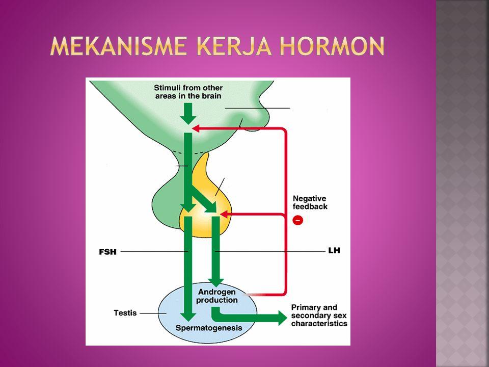 Pituitari mensekresikan dua hormon GnRH dengan pengaruh yang berbeda-beda pada testis.