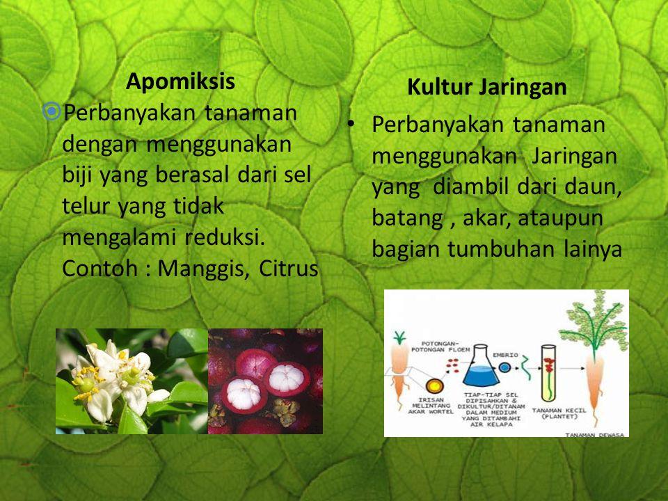 Apomiksis  Perbanyakan tanaman dengan menggunakan biji yang berasal dari sel telur yang tidak mengalami reduksi. Contoh : Manggis, Citrus Kultur Jari