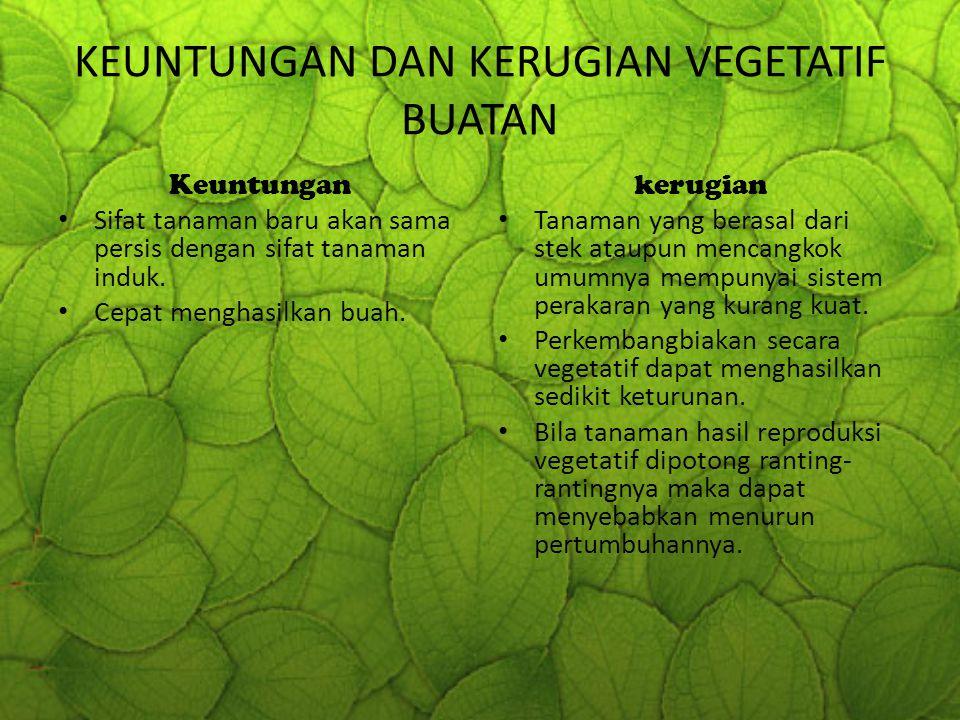 KEUNTUNGAN DAN KERUGIAN VEGETATIF BUATAN Keuntungan Sifat tanaman baru akan sama persis dengan sifat tanaman induk. Cepat menghasilkan buah. kerugian