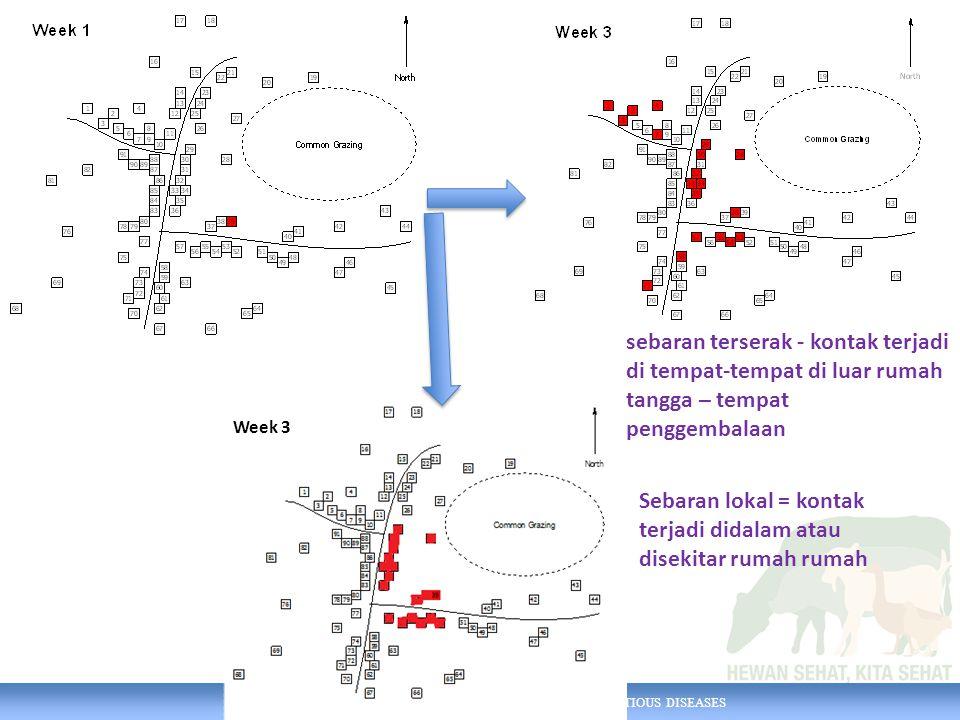 AUSTRALIA INDONESIA PARTNERSHIP FOR EMERGING INFECTIOUS DISEASES sebaran terserak - kontak terjadi di tempat-tempat di luar rumah tangga – tempat penggembalaan Week 3 Sebaran lokal = kontak terjadi didalam atau disekitar rumah rumah