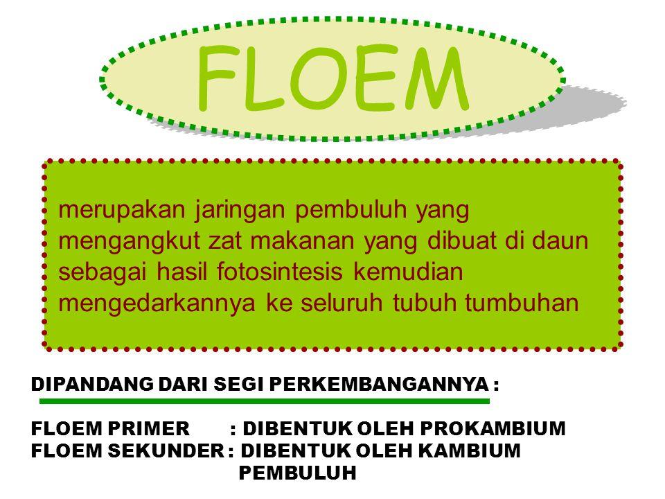 FLOEM merupakan jaringan pembuluh yang mengangkut zat makanan yang dibuat di daun sebagai hasil fotosintesis kemudian mengedarkannya ke seluruh tubuh