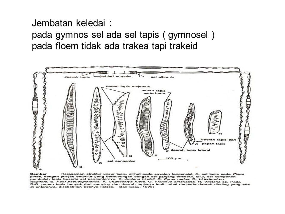 Floem koniferFloem konifer Floem sekunder lebih sederhana dan kurang bervariasi Sistem aksial tdr sel tapis dan sel parenkim Beberapa sel parenkim berdeferensiasi sebagai sel albumin Ditemukan serat dan sklereid Ditemukan saluran harsa pada sistem aksial dan radial Sel tapis panjang, daerah tapis banyak
