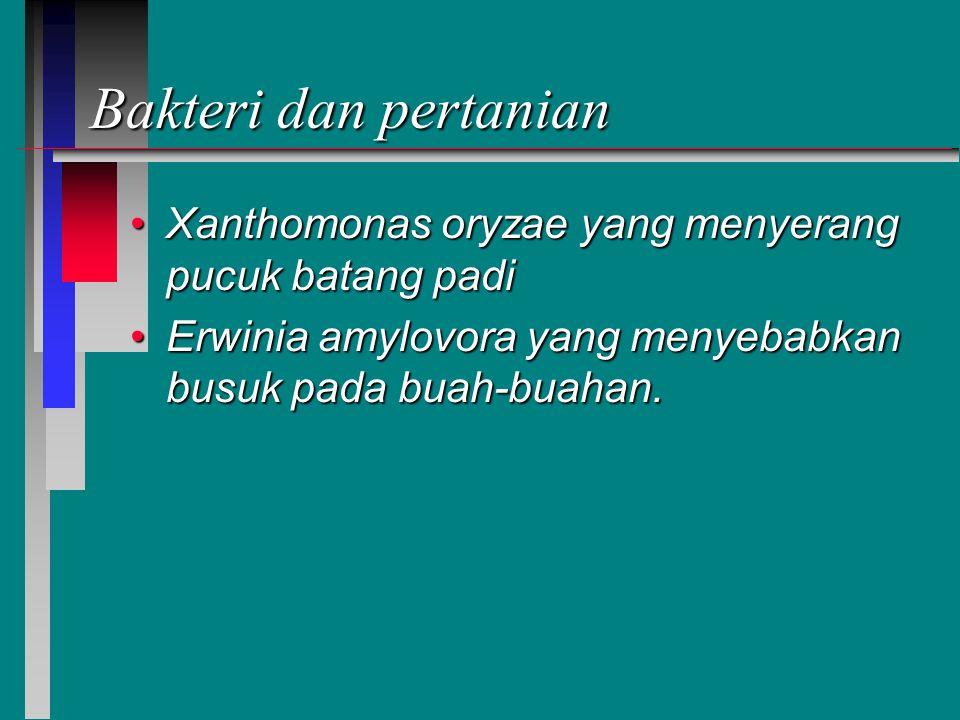 Bakteri dan pertanian Xanthomonas oryzae yang menyerang pucuk batang padiXanthomonas oryzae yang menyerang pucuk batang padi Erwinia amylovora yang menyebabkan busuk pada buah-buahan.Erwinia amylovora yang menyebabkan busuk pada buah-buahan.