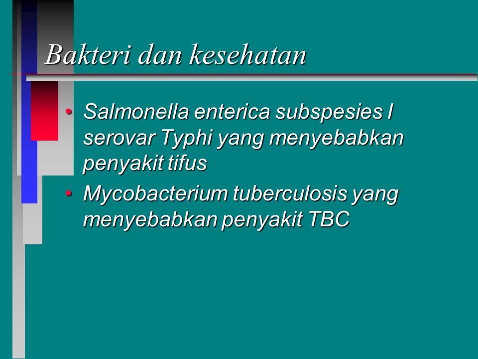 Bakteri dan kesehatan Salmonella enterica subspesies I serovar Typhi yang menyebabkan penyakit tifusSalmonella enterica subspesies I serovar Typhi yang menyebabkan penyakit tifus Mycobacterium tuberculosis yang menyebabkan penyakit TBCMycobacterium tuberculosis yang menyebabkan penyakit TBC