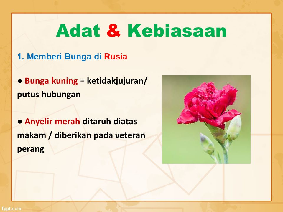 Adat & Kebiasaan 1. Memberi Bunga di Rusia ● Bunga kuning = ketidakjujuran/ putus hubungan ● Anyelir merah ditaruh diatas makam / diberikan pada veter