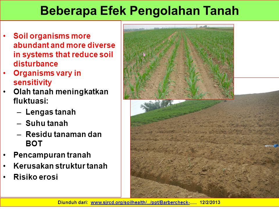 Beberapa Efek Pengolahan Tanah Soil organisms more abundant and more diverse in systems that reduce soil disturbance Organisms vary in sensitivity Ola