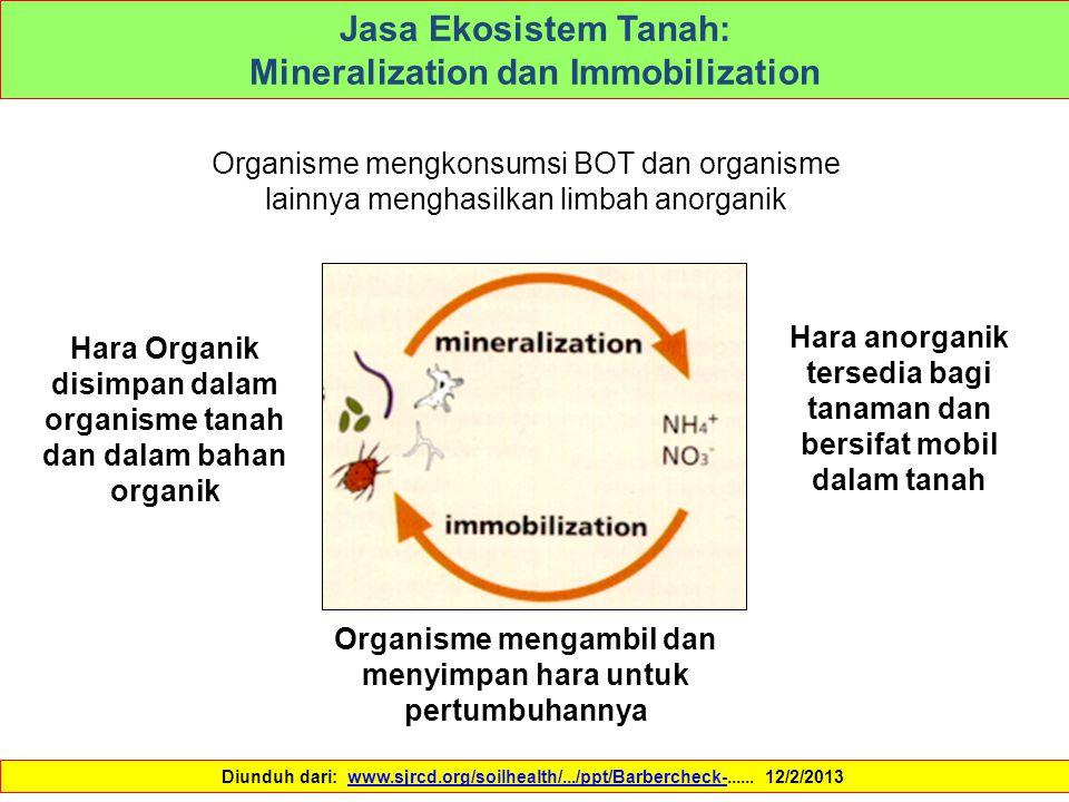 Jasa Ekosistem Tanah: Mineralization dan Immobilization Organisme mengkonsumsi BOT dan organisme lainnya menghasilkan limbah anorganik Hara anorganik