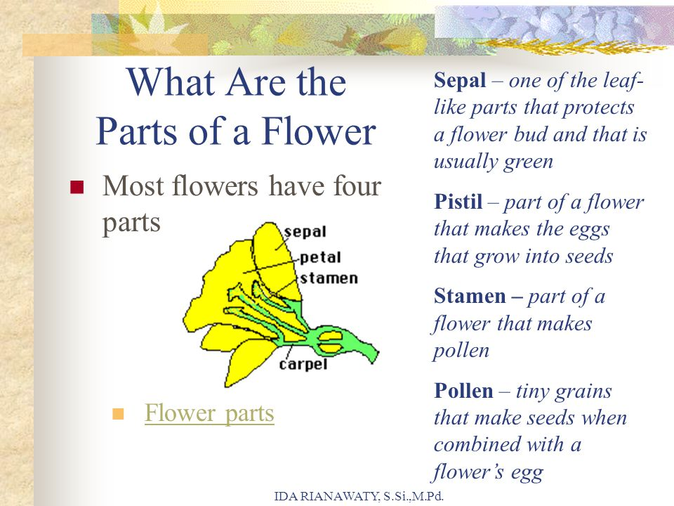 What Are the Parts of a Flower Most flowers have four parts Flower parts Sepal – one of the leaf- like parts that protects a flower bud and that is us