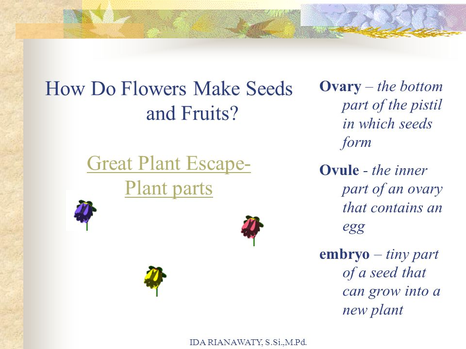 How Do Flowers Make Seeds and Fruits? Great Plant Escape- Plant parts Great Plant Escape- Plant parts Ovary – the bottom part of the pistil in which s