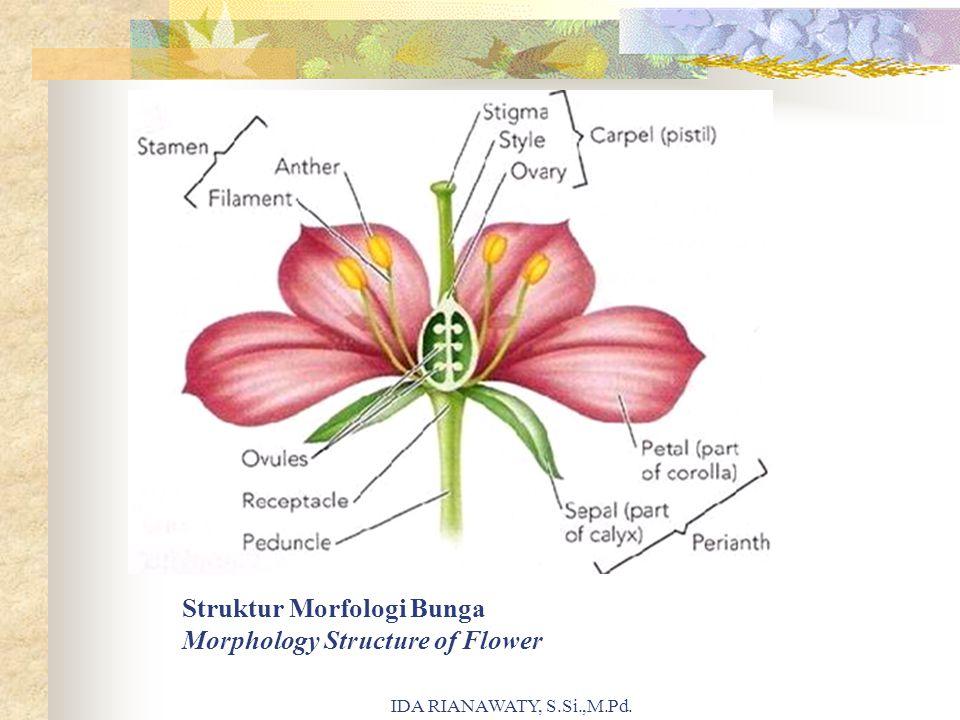 Struktur Morfologi Bunga Morphology Structure of Flower IDA RIANAWATY, S.Si.,M.Pd.