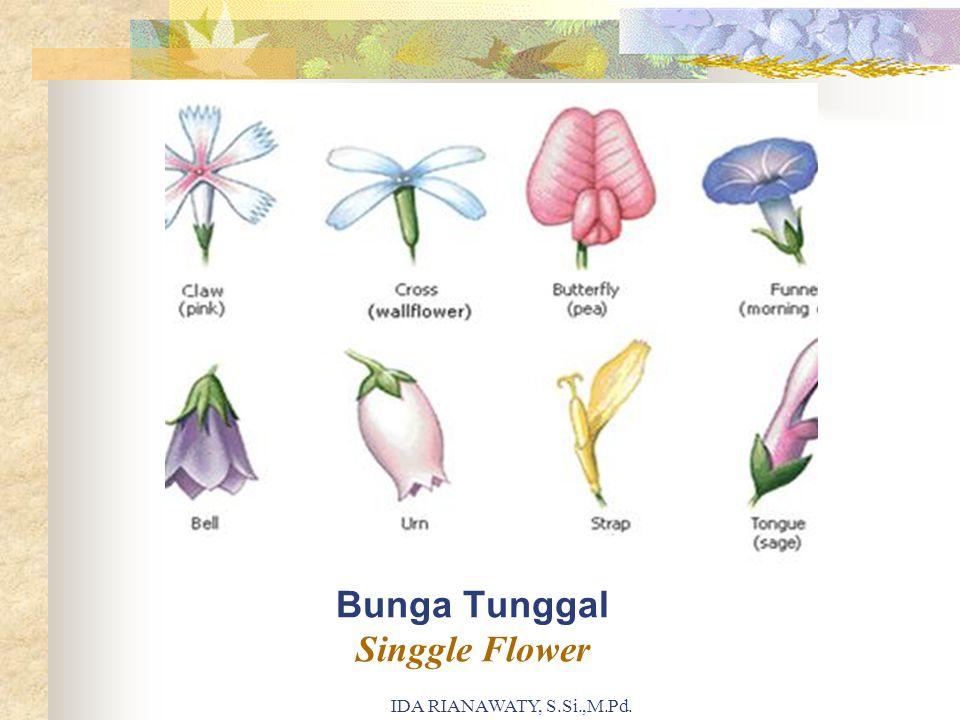 Bunga Tunggal Singgle Flower IDA RIANAWATY, S.Si.,M.Pd.