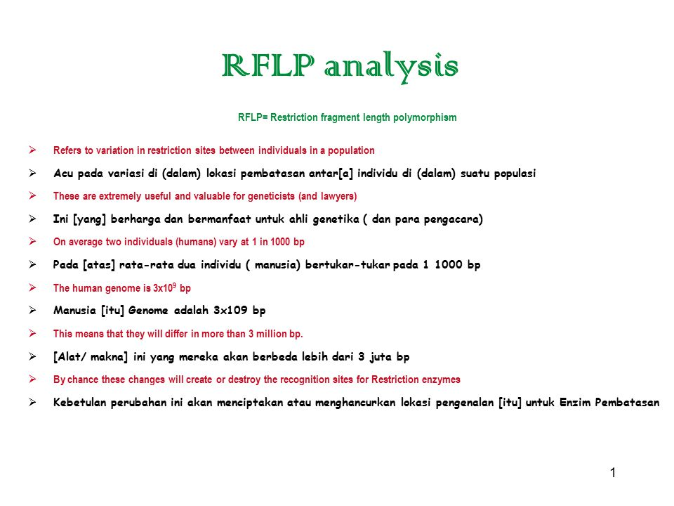 1 RFLP analysis RFLP= Restriction fragment length polymorphism  Refers to variation in restriction sites between individuals in a population  Acu pa