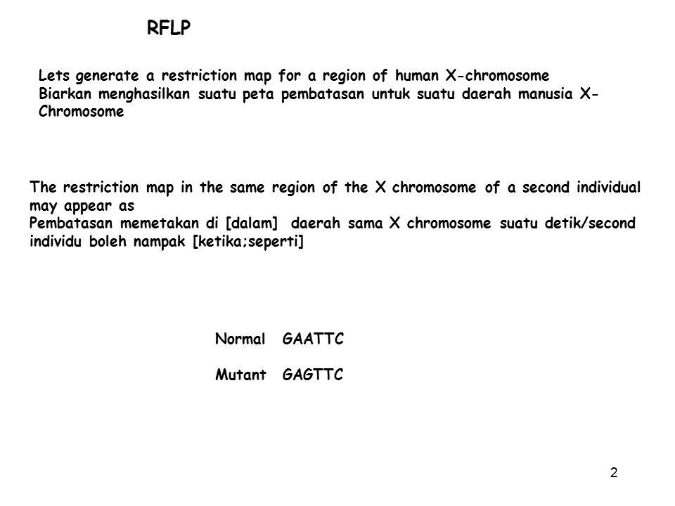 2 RFLP Lets generate a restriction map for a region of human X-chromosome Biarkan menghasilkan suatu peta pembatasan untuk suatu daerah manusia X- Chr