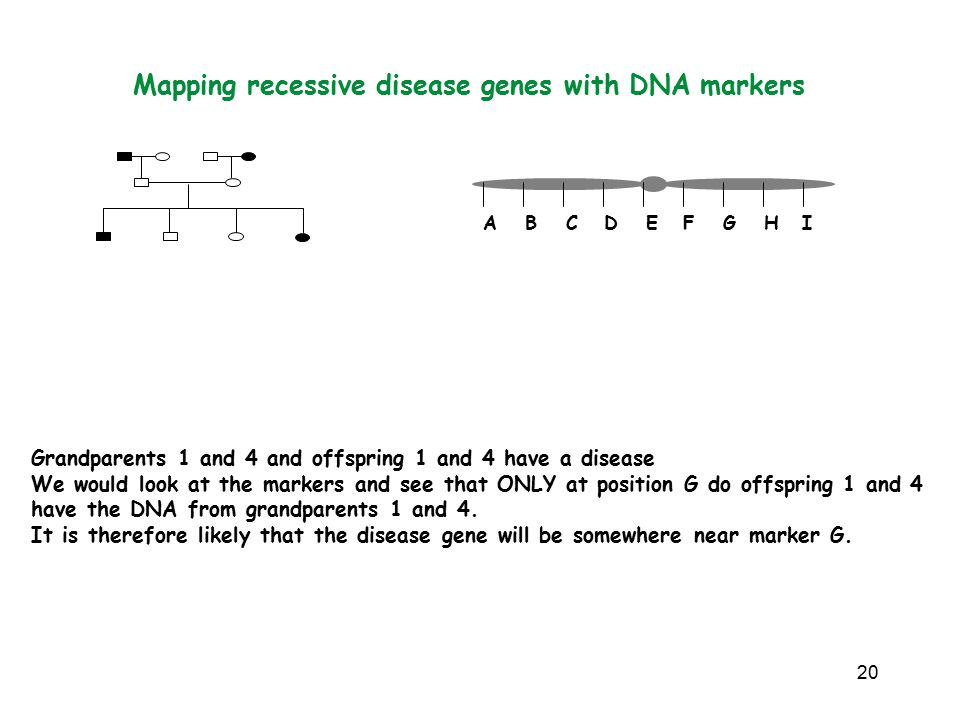 20 Mapping recessive disease genes with DNA markers Grandparents 1 and 4 and offspring 1 and 4 have a disease We would look at the markers and see that ONLY at position G do offspring 1 and 4 have the DNA from grandparents 1 and 4.