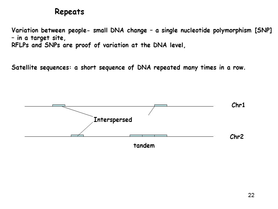 22 Repeats Variation between people- small DNA change – a single nucleotide polymorphism [SNP] – in a target site, RFLPs and SNPs are proof of variation at the DNA level, Satellite sequences: a short sequence of DNA repeated many times in a row.