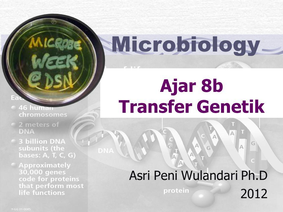 Ajar 8b Transfer Genetik Asri Peni Wulandari Ph.D 2012 Microbiology