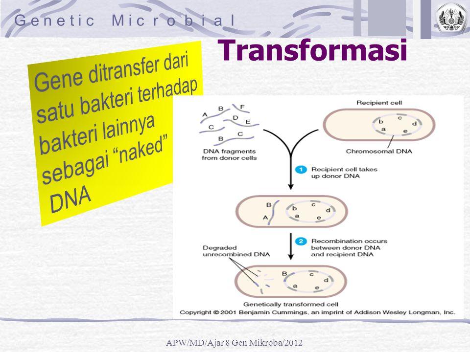 Transformasi G e n e t i c M i c r o b i a l APW/MD/Ajar 8 Gen Mikroba/2012