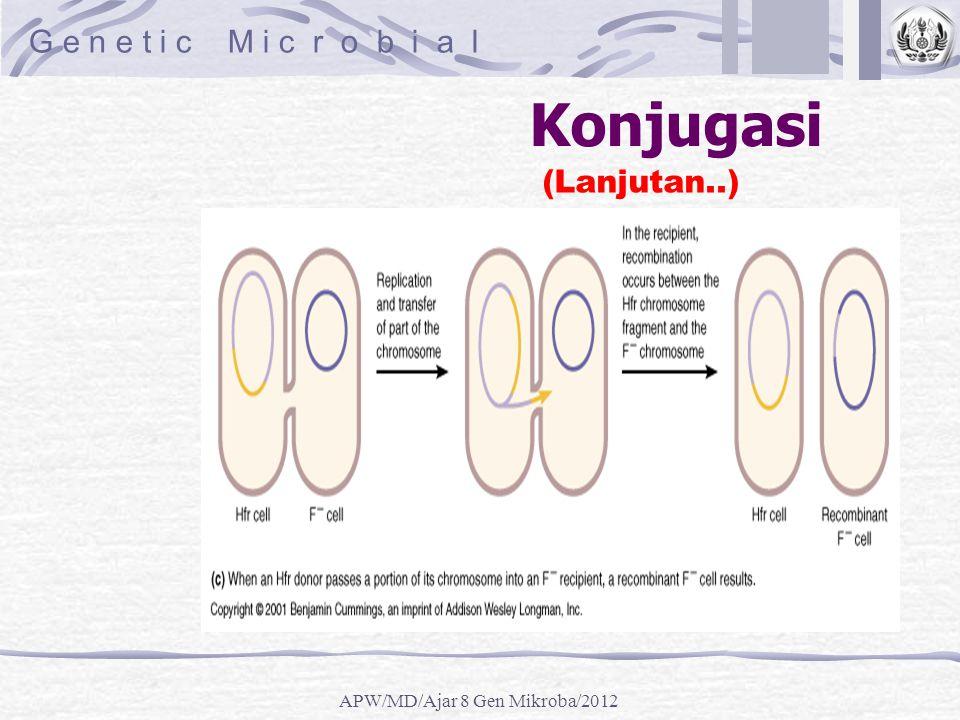 Konjugasi (Lanjutan..) G e n e t i c M i c r o b i a l APW/MD/Ajar 8 Gen Mikroba/2012