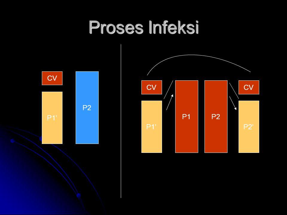 Proses Infeksi CV P1' P2 P1' P1 P2' P2 CV