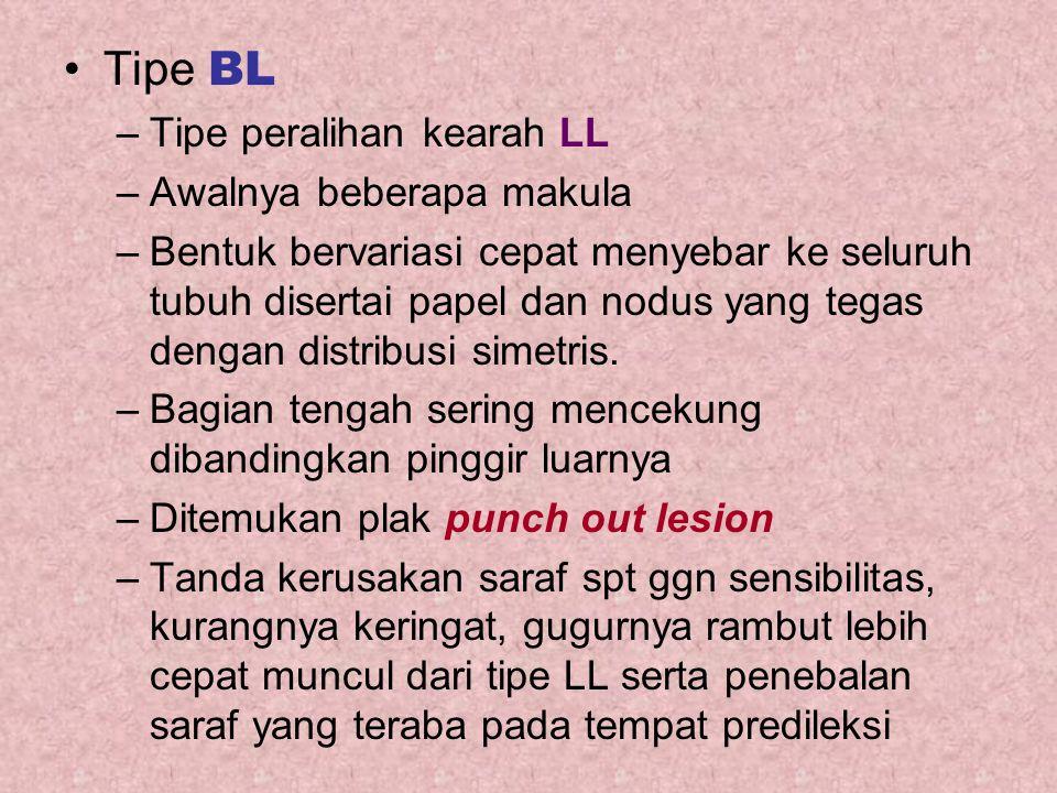 Tipe BL –Tipe peralihan kearah LL –Awalnya beberapa makula –Bentuk bervariasi cepat menyebar ke seluruh tubuh disertai papel dan nodus yang tegas deng