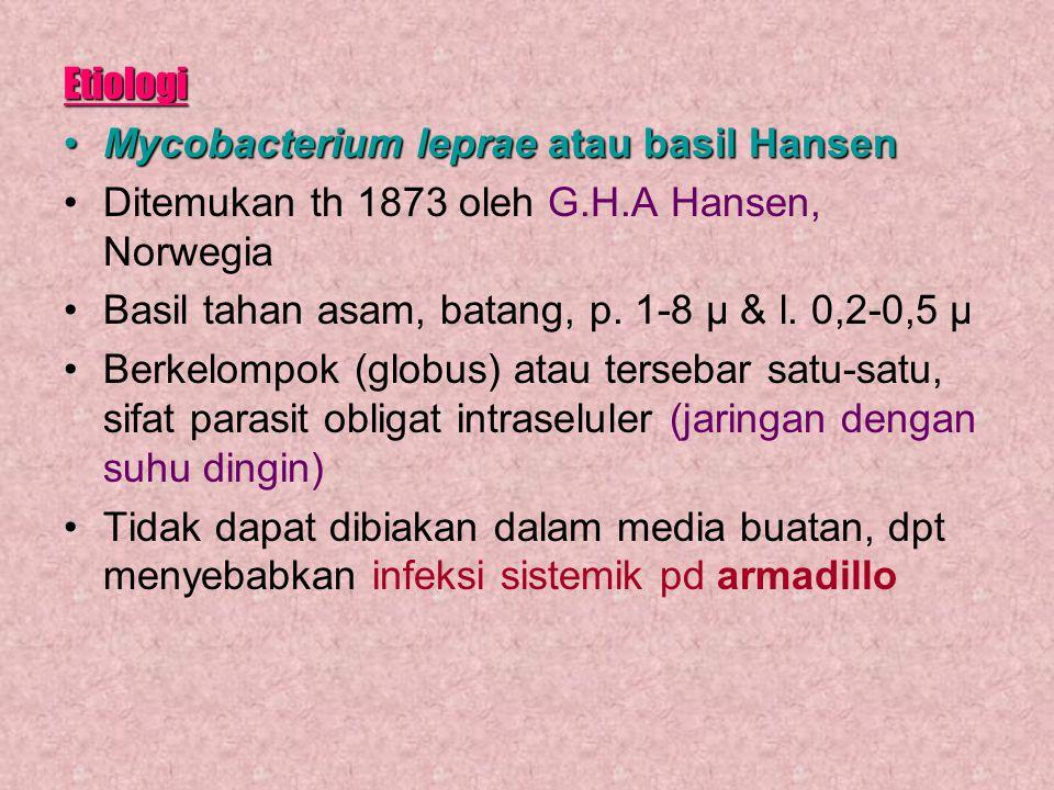 Etiologi Mycobacterium leprae atau basil HansenMycobacterium leprae atau basil Hansen Ditemukan th 1873 oleh G.H.A Hansen, Norwegia Basil tahan asam,