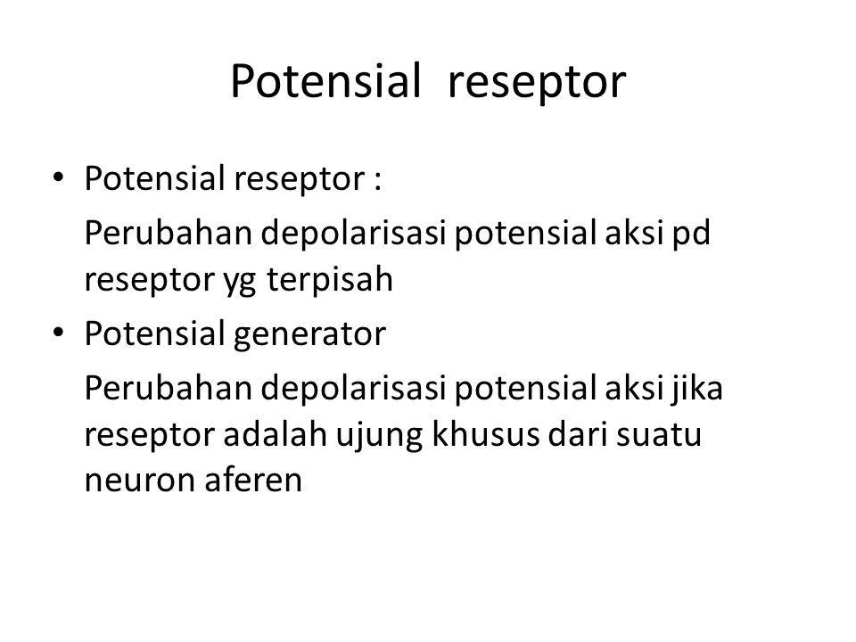 Potensial reseptor Potensial reseptor : Perubahan depolarisasi potensial aksi pd reseptor yg terpisah Potensial generator Perubahan depolarisasi potensial aksi jika reseptor adalah ujung khusus dari suatu neuron aferen
