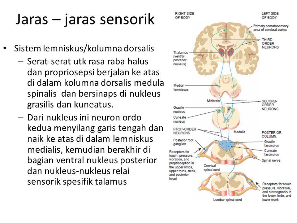 Jaras – jaras sensorik Sistem lemniskus/kolumna dorsalis – Serat-serat utk rasa raba halus dan propriosepsi berjalan ke atas di dalam kolumna dorsalis medula spinalis dan bersinaps di nukleus grasilis dan kuneatus.