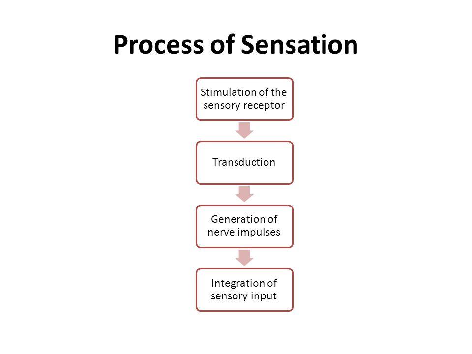 Setiap neuron sensorik berespon thdp informasi sensorik hanya dalam daerah terbatas di permukaan kulit sekitarnya yang dikenal sbg lapangan reseptif Semakin besar ukuran lapangan reseptif semakin rendah kepadatan reseptor daerah tsbt Semakin kecil lapangan reseptif suatu bagian tubuh, semakin besar ketajaman atau kemampuan diskriminatif
