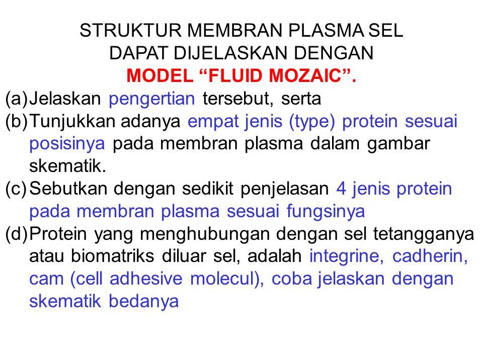 "STRUKTUR MEMBRAN PLASMA SEL DAPAT DIJELASKAN DENGAN MODEL ""FLUID MOZAIC"". (a)Jelaskan pengertian tersebut, serta (b)Tunjukkan adanya empat jenis (type"