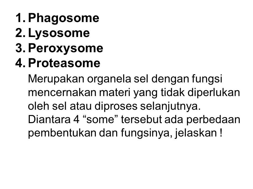 1.Phagosome 2.Lysosome 3.Peroxysome 4.Proteasome Merupakan organela sel dengan fungsi mencernakan materi yang tidak diperlukan oleh sel atau diproses