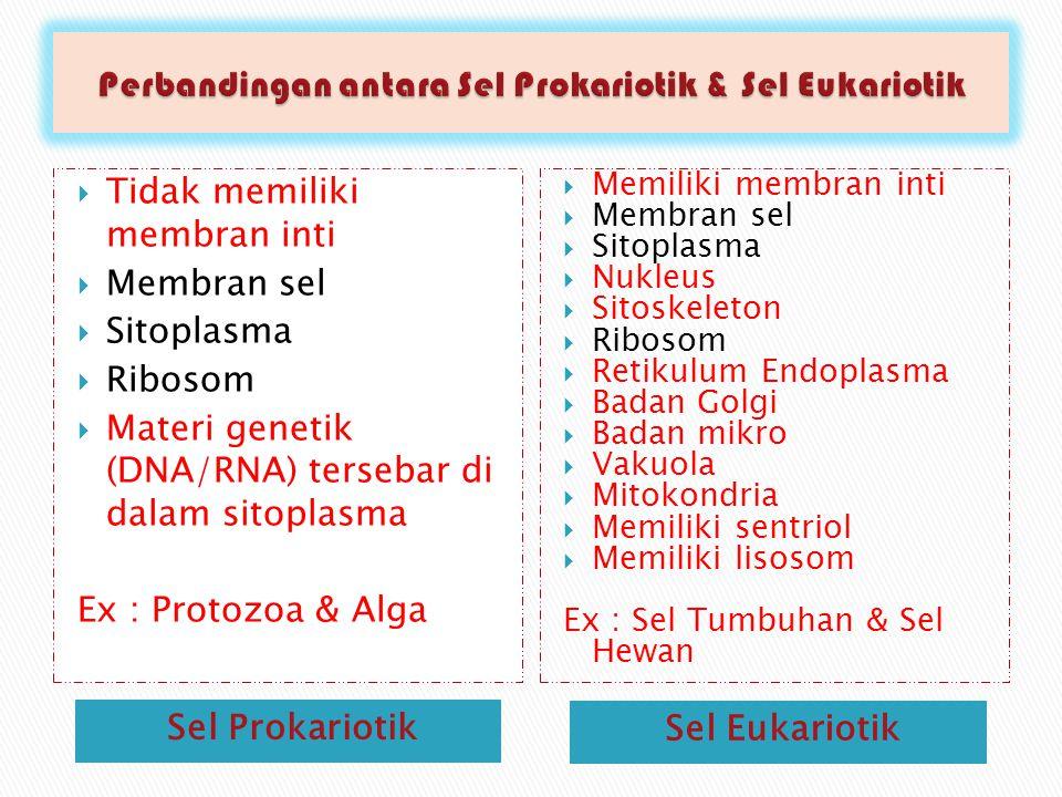 Sel Prokariotik Sel Eukariotik  Tidak memiliki membran inti  Membran sel  Sitoplasma  Ribosom  Materi genetik (DNA/RNA) tersebar di dalam sitoplasma Ex : Protozoa & Alga  Memiliki membran inti  Membran sel  Sitoplasma  Nukleus  Sitoskeleton  Ribosom  Retikulum Endoplasma  Badan Golgi  Badan mikro  Vakuola  Mitokondria  Memiliki sentriol  Memiliki lisosom Ex : Sel Tumbuhan & Sel Hewan
