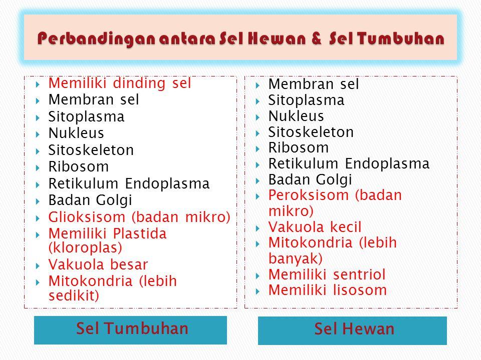 Sel Tumbuhan Sel Hewan  Memiliki dinding sel  Membran sel  Sitoplasma  Nukleus  Sitoskeleton  Ribosom  Retikulum Endoplasma  Badan Golgi  Glioksisom (badan mikro)  Memiliki Plastida (kloroplas)  Vakuola besar  Mitokondria (lebih sedikit)  Membran sel  Sitoplasma  Nukleus  Sitoskeleton  Ribosom  Retikulum Endoplasma  Badan Golgi  Peroksisom (badan mikro)  Vakuola kecil  Mitokondria (lebih banyak)  Memiliki sentriol  Memiliki lisosom
