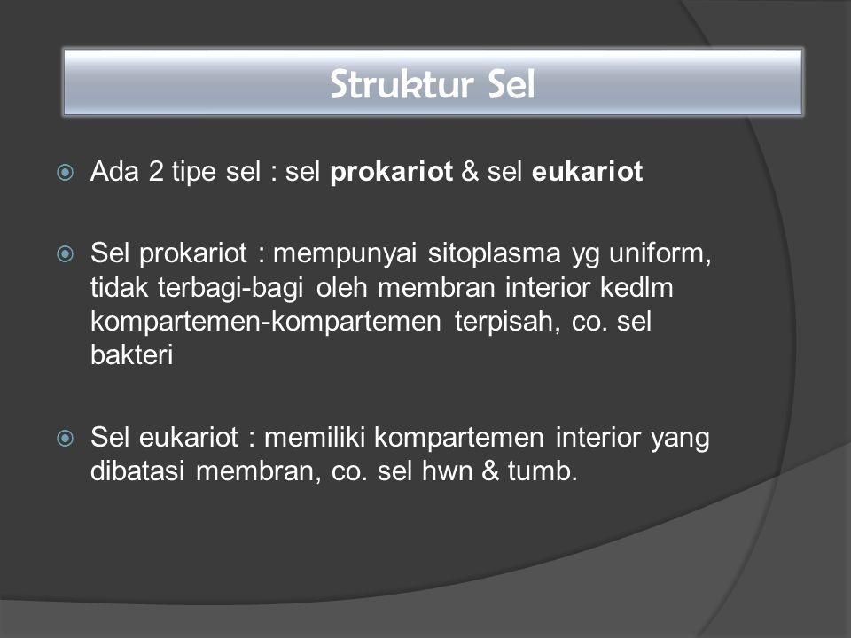 Struktur Sel  Ada 2 tipe sel : sel prokariot & sel eukariot  Sel prokariot : mempunyai sitoplasma yg uniform, tidak terbagi-bagi oleh membran interi