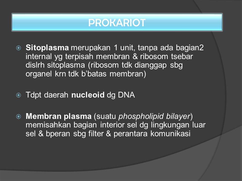 PROKARIOT  Sitoplasma merupakan 1 unit, tanpa ada bagian2 internal yg terpisah membran & ribosom tsebar dislrh sitoplasma (ribosom tdk dianggap sbg o