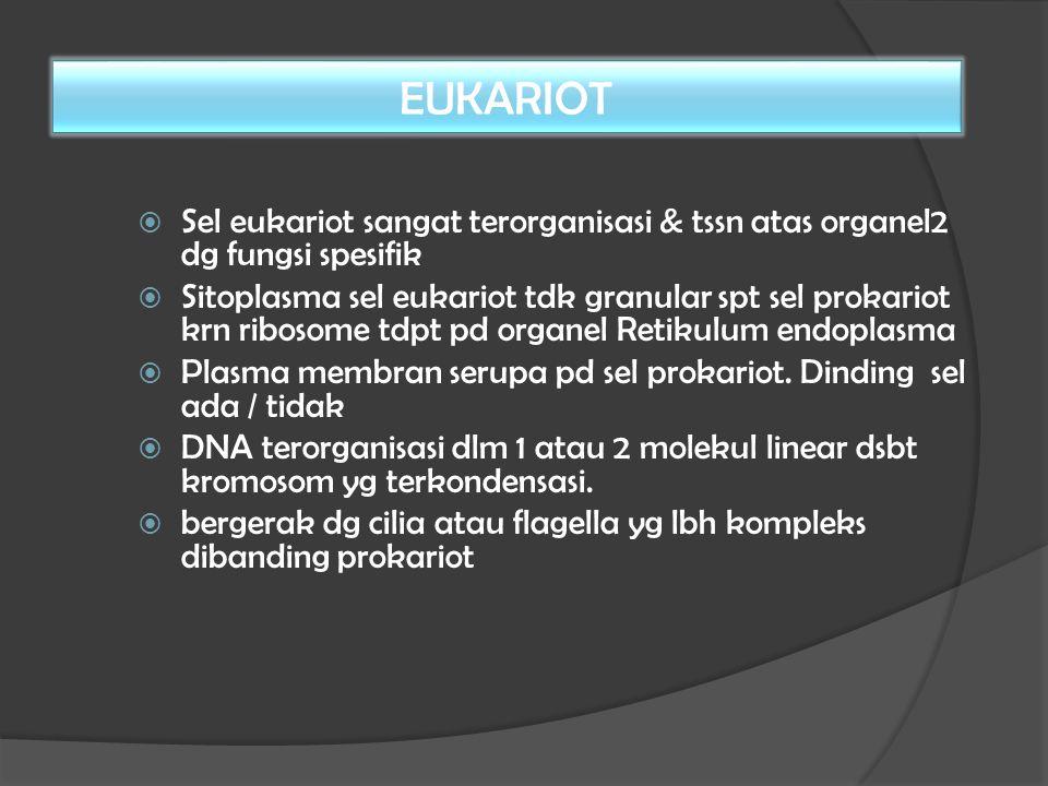  Sel eukariot sangat terorganisasi & tssn atas organel2 dg fungsi spesifik  Sitoplasma sel eukariot tdk granular spt sel prokariot krn ribosome tdpt