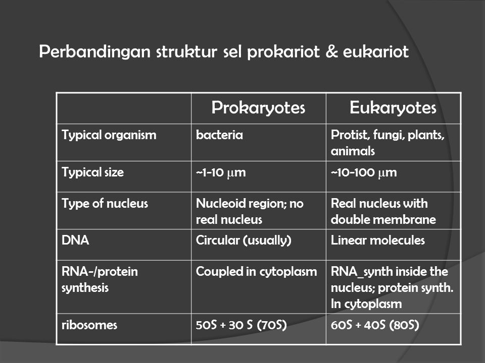 Perbandingan struktur sel prokariot & eukariot ProkaryotesEukaryotes Typical organismbacteriaProtist, fungi, plants, animals Typical size ~1-10 μ m~10-100 μ m Type of nucleusNucleoid region; no real nucleus Real nucleus with double membrane DNACircular (usually)Linear molecules RNA-/protein synthesis Coupled in cytoplasmRNA_synth inside the nucleus; protein synth.