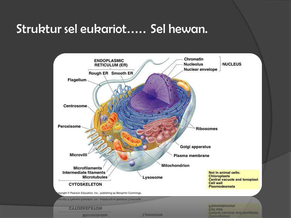 Struktur sel eukariot ….. Sel hewan.