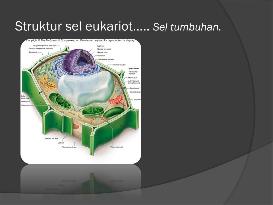 Struktur sel eukariot….. Sel tumbuhan.