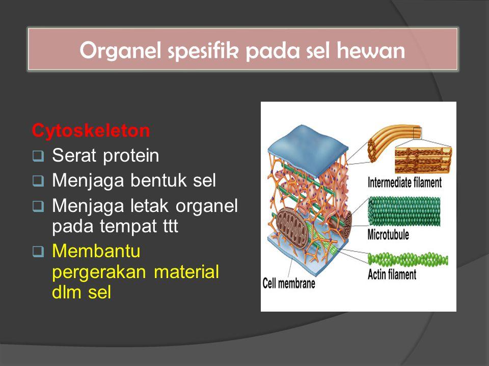 Cytoskeleton  Serat protein  Menjaga bentuk sel  Menjaga letak organel pada tempat ttt  Membantu pergerakan material dlm sel Organel spesifik pada