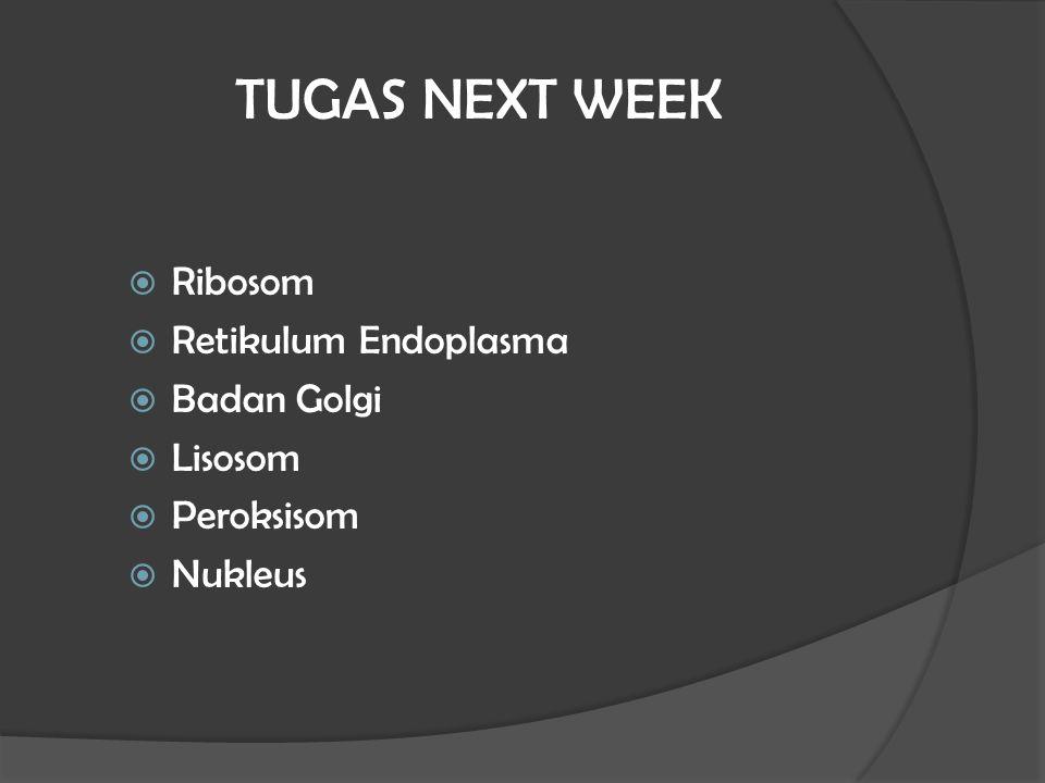 TUGAS NEXT WEEK  Ribosom  Retikulum Endoplasma  Badan Golgi  Lisosom  Peroksisom  Nukleus