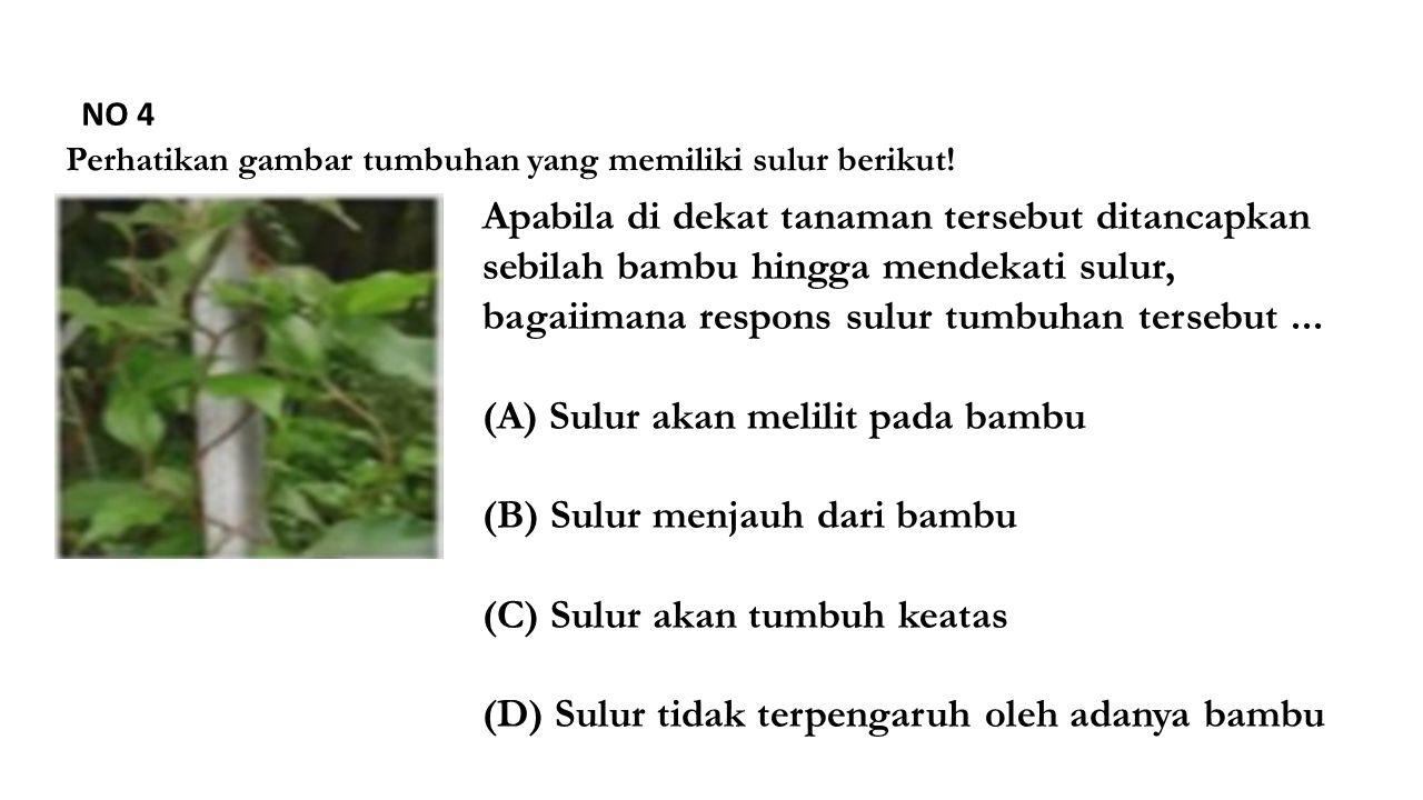 NO 4 Perhatikan gambar tumbuhan yang memiliki sulur berikut.