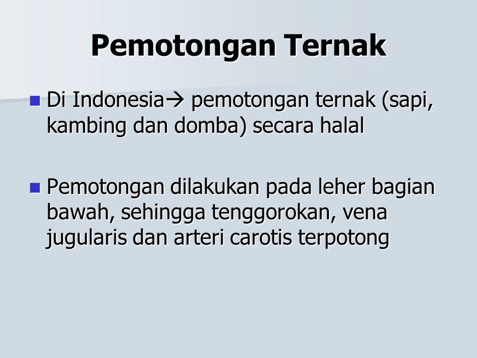 Pemotongan Ternak Di Indonesia  pemotongan ternak (sapi, kambing dan domba) secara halal Di Indonesia  pemotongan ternak (sapi, kambing dan domba) s